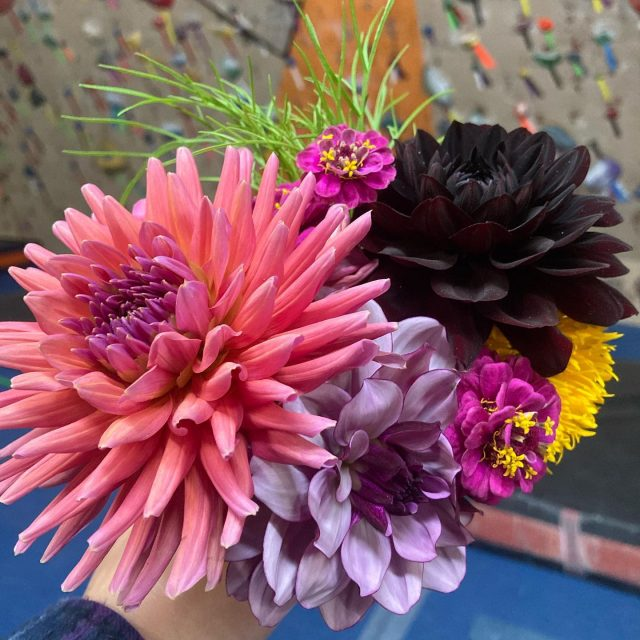 When you know @practical_climbing  has been at the gym.  Thank you, Tammy, for delivering some flower power along with new mask selections. - Have a beautiful Sunday, all! #confidencecommunityclimbing #prg #prgoaks #phillyclimbers #flowerpower #practicalclimbing